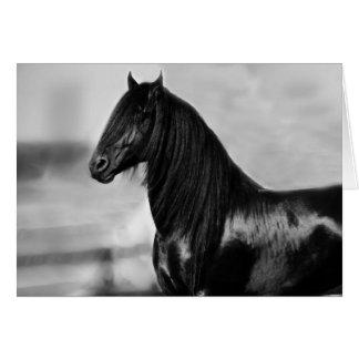 Cavalo orgulhoso do garanhão do preto do frisão cartões