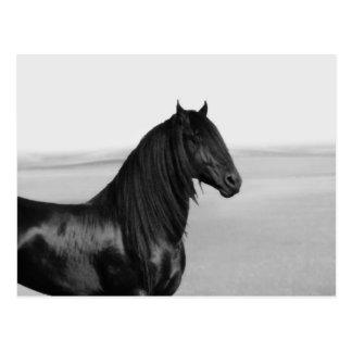 Cavalo orgulhoso do garanhão do preto do frisão cartoes postais