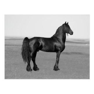 Cavalo orgulhoso do garanhão do preto do frisão cartao postal