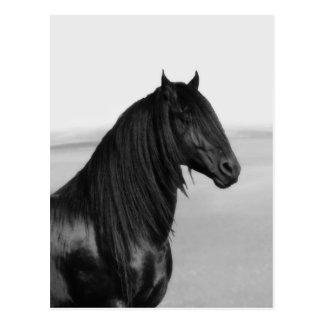Cavalo orgulhoso do garanhão do preto do frisão cartão postal