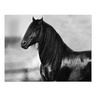 Cavalo orgulhoso do garanhão do preto do frisão convite personalizado