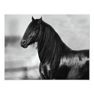 Cavalo orgulhoso do garanhão do preto do frisão convite 10.79 x 13.97cm