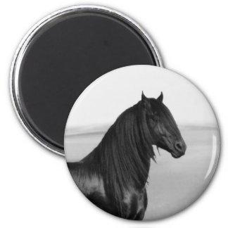 Cavalo orgulhoso do garanhão do preto do frisão imã