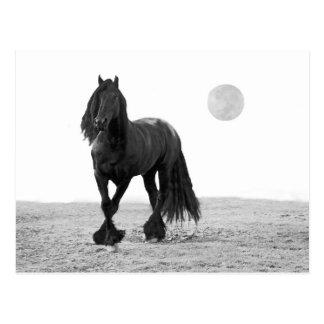 Cavalo perfeito cartoes postais