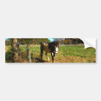 Cavalo pintado adesivos