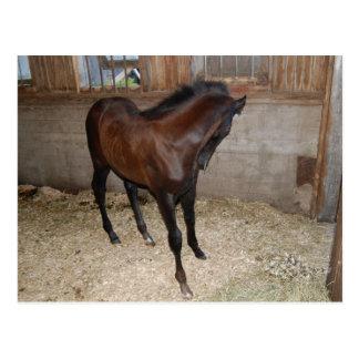 Cavalo/pônei Cartão Postal