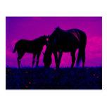 Cavalo & potro cartão postal