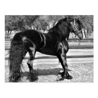 Cavalo preto do garanhão cartões postais