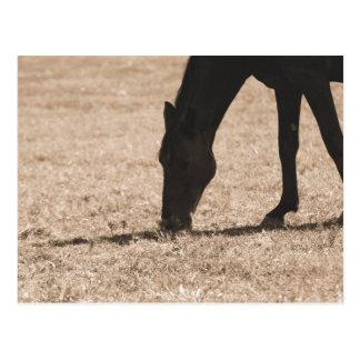 Cavalo que pasta o cartão da silhueta