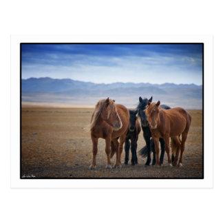 Cavalo selvagem do Mongolian, cartão do deserto de