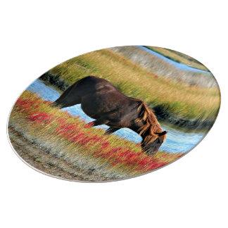 Cavalo selvagem que come em The Field Prato