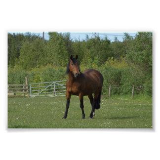 Cavalo solitário impressão de foto