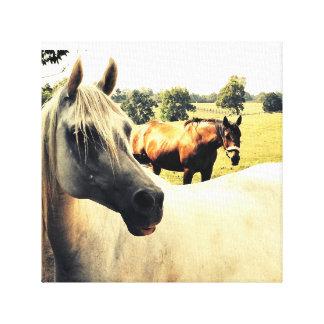 Cavalos árabes no campo impressão em tela
