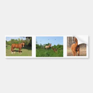 Cavalos - cavalos bonitos adesivo para carro