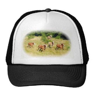 Cavalos de esboço no campo boné