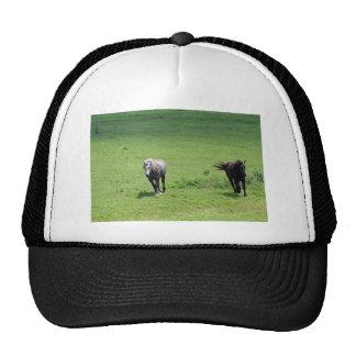 Cavalos de galope bonés