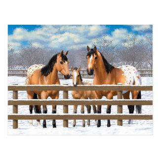 Cavalos do Appaloosa do Buckskin na neve Cartão Postal