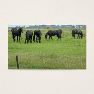 Cavalos do frisão no cartão com fotos pequeno do