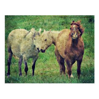 Cavalos engraçados cartão postal
