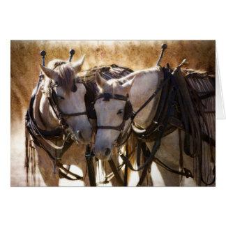 Cavalos no cartão do chicote de fios