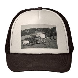 Cavalos no jogo boné