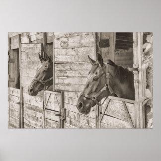Cavalos no poster estável