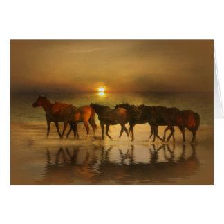 Cavalos nos cartões de nota do vazio da praia