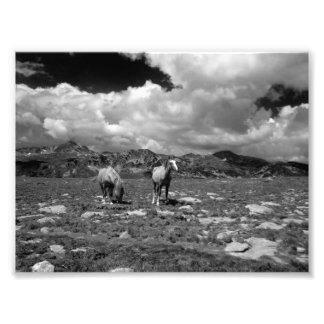 Cavalos (preto e branco)