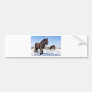 Cavalos pretos do frisian na neve do inverno adesivo para carro