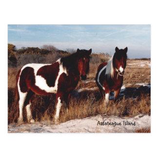 Cavalos selvagens 2 de Assateague - cartão