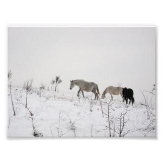 Cavalos selvagens na foto do profissional de Kodak