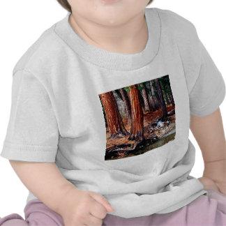 Cedros da angra de Yosemite das árvores T-shirts