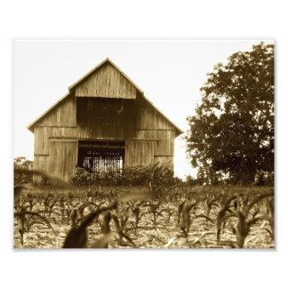 Celeiro velho do tabaco de Kentucky Impressão De Foto