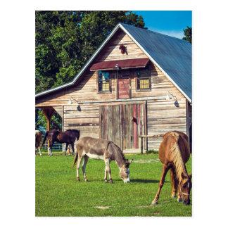 Cena bonita da fazenda com cavalos e celeiro cartão postal
