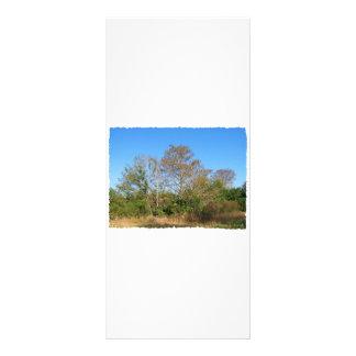 Cena de Florida Cypress calvo em um pântano 10.16 X 22.86cm Panfleto