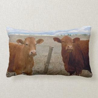 Cena rural das vacas vermelhas ocidentais bonito d travesseiro