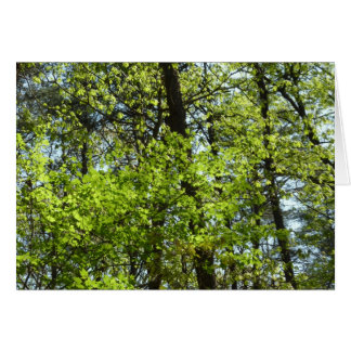 Cena verde da natureza das folhas de bordo do cartão comemorativo