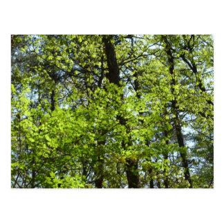Cena verde da natureza das folhas de bordo do cartão postal
