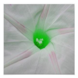Centro verde da flor fotografia