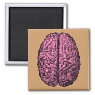 Cérebro humano da anatomia ímã quadrado