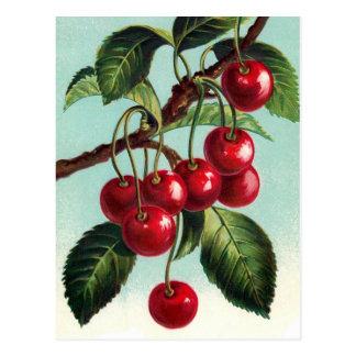 Cerejas do vintage em um cartão do ramo