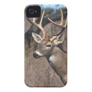 Cervos Branco-Atados - cobrir do iPhone 4/4S Capa Para iPhone