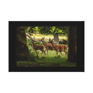 cervos da imagem de impressão das canvas que