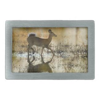 Cervos de WhiteTail - mamífero americano Collectio