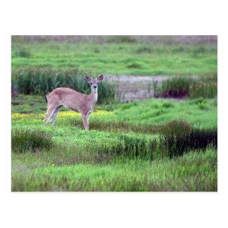 Cervos no cartão do campo
