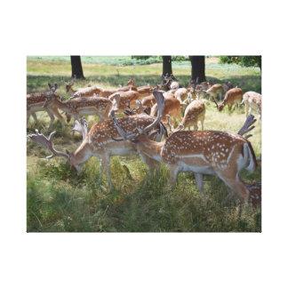 Cervos no impressão das canvas do parque