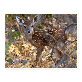 Cervos pequenos doces da jovem corça no cartão da