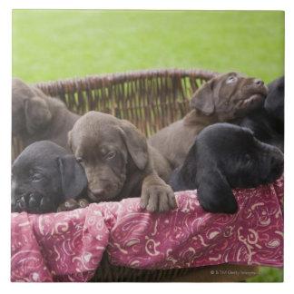 Cesta de filhotes de cachorro de labrador retrieve azulejo quadrado grande
