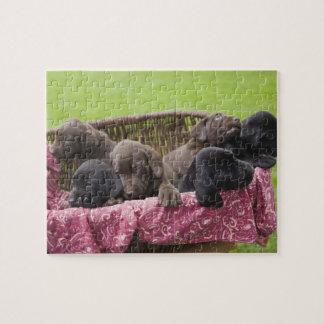 Cesta de filhotes de cachorro de labrador retrieve quebra-cabeça de foto