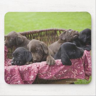 Cesta de filhotes de cachorro de labrador retrieve mouse pad